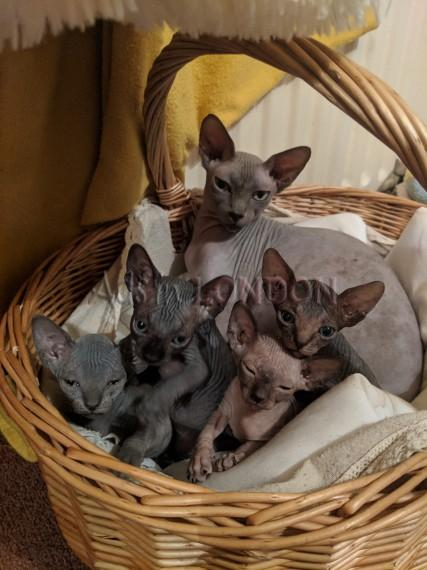 Beautiful Kittens Looking For Loving Home