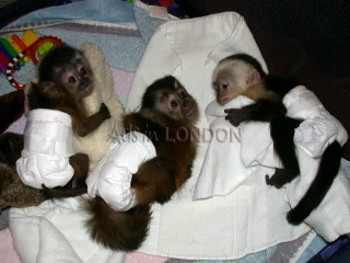 Monkey babies and other primates